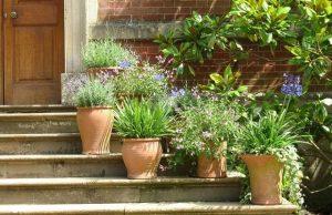 pot-plants