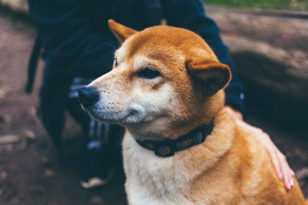 Dog Shock Collar3