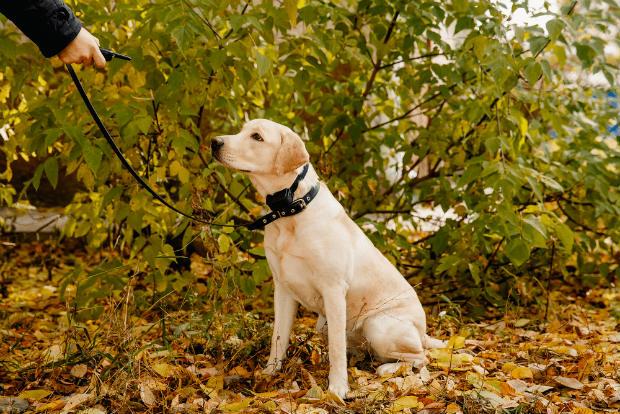 Dog Shock Collar2