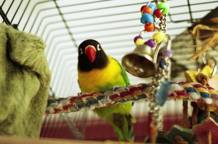 bird-toys