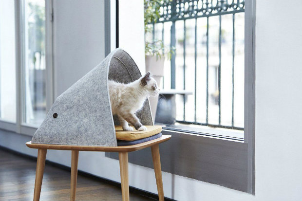 cat plush toy a room with a view