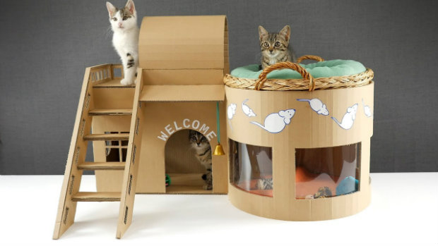 cat plush toy cardbox