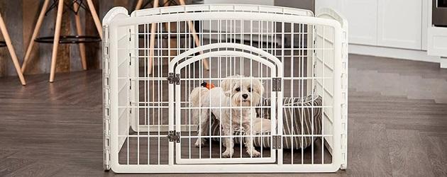 dog enclosure indoor