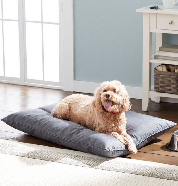 dog with bed