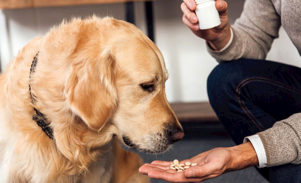 giving medication to dogs
