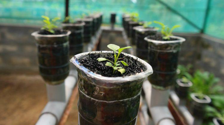 one plant per pot