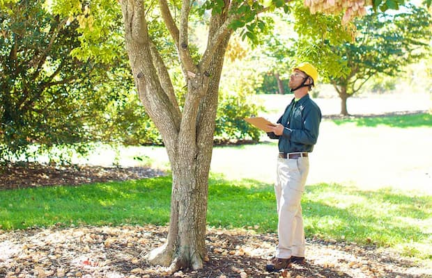 professional arborist looking at the tree and writting an assessment