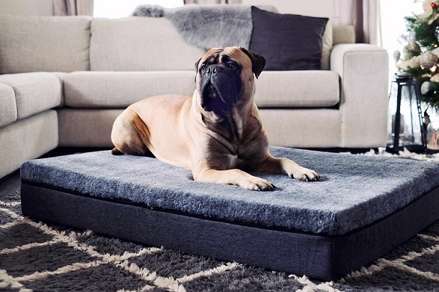 large-dog-bed-with-memory-foam