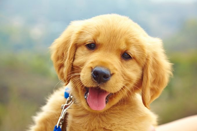 happy puppy smiling at the camera